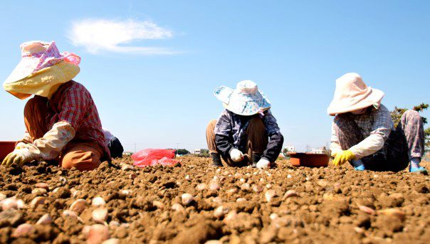women farming garlic